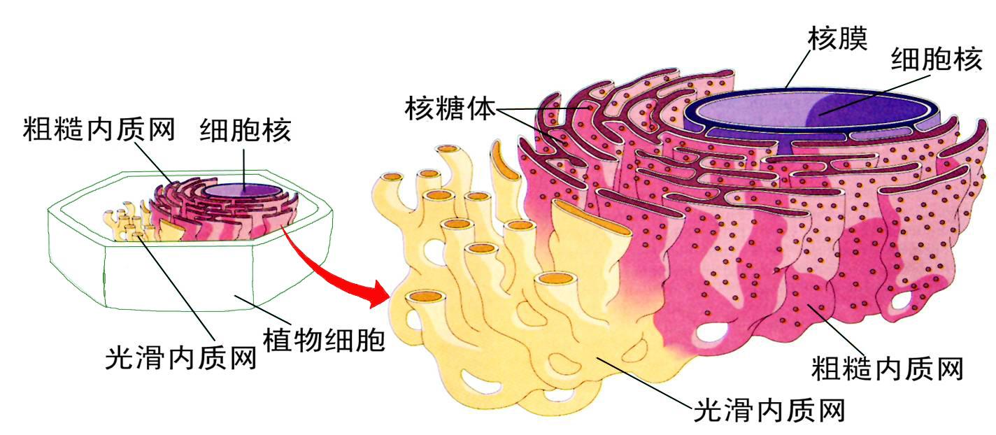 头部块面结构图片